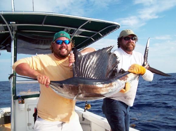 Spotting a Sailfish