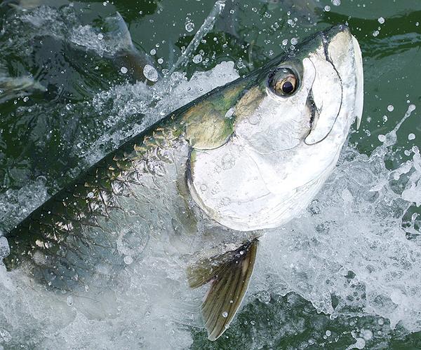 Charter Fishing Florida Keys
