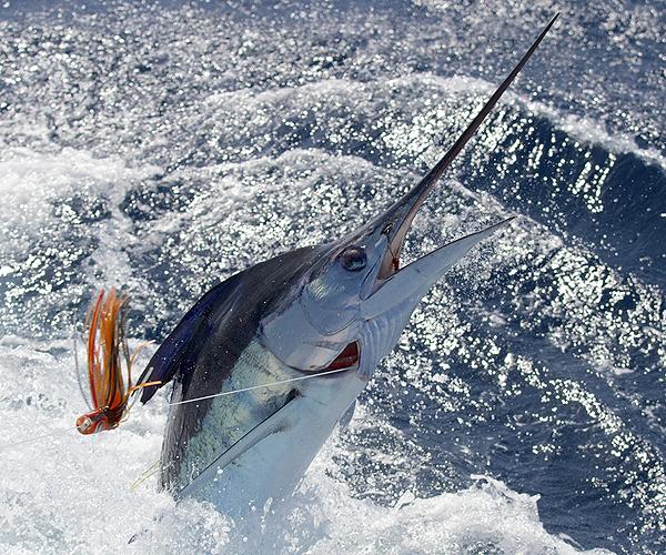 Key West Deep Sea Fishing