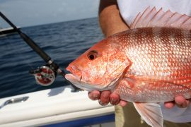 red snapper, charter boat, December fishing, December fishing report, Captain Moe's December fishing report. winter fishing, Florida Keys fishing, Key West fishing