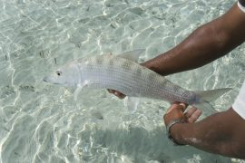 Man holding Bonefish in Key West FL
