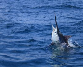 July Fishing Report